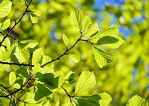Immunerősítő tippek a természet ajánlásával